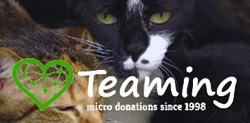 Teaming. Microdonaciones